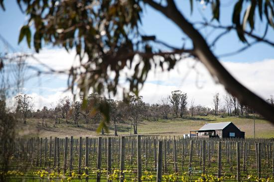 Dunalley, Australia: The vineyard at Bangor Shed
