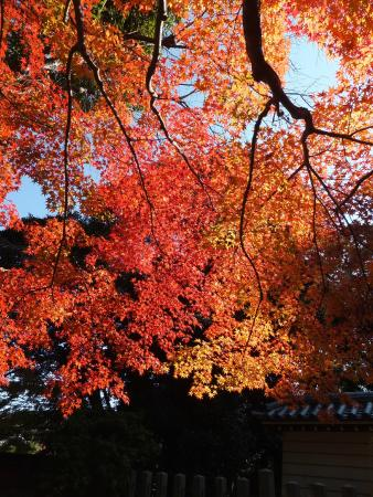 Akishinodera Temple: 東門の紅葉