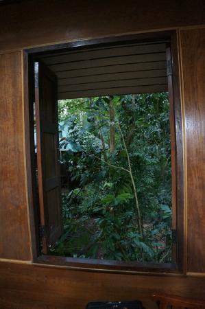 Khao Sok Nature Resort : Вид из окна