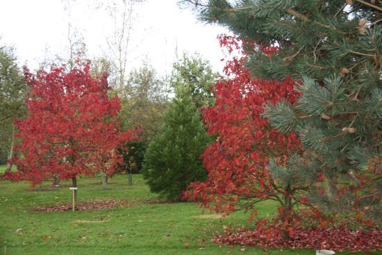 Bluebell Arboretum and Nursery: Reds of Autumn