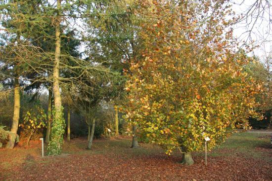 Bluebell Arboretum and Nursery: Autumn leaves
