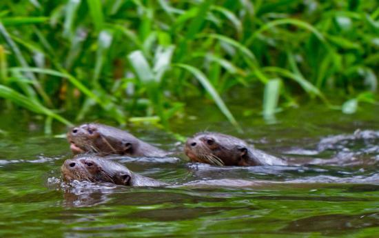 Napo Wildlife Center Ecolodge: Wildlife Amazon Ecuador
