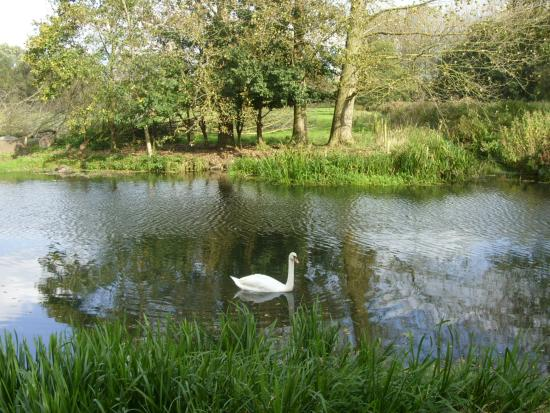 Bungay, UK: Even the Swan liked it