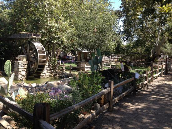 Irvine Regional Park: ✾
