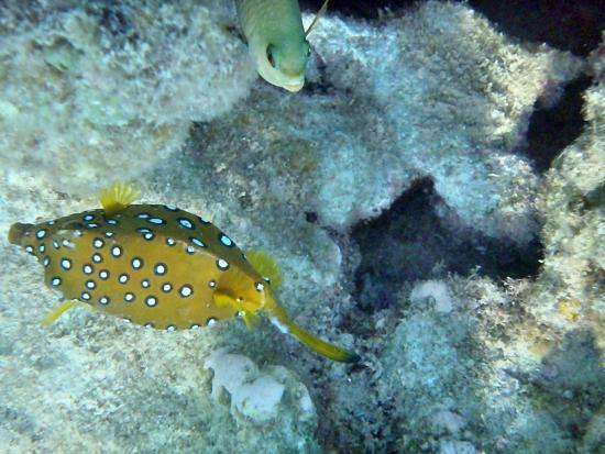 Shams Safaga : coral fish
