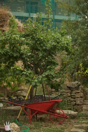 B&B Antico Borgo: Garden