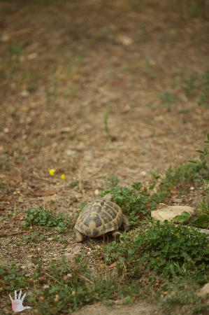 B&B Antico Borgo: Turtle