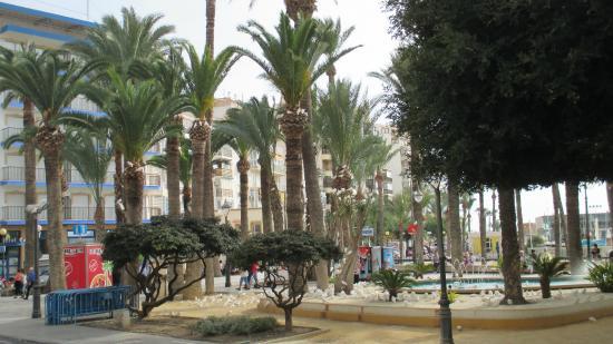Parque de Elche: Пальмы и голуби