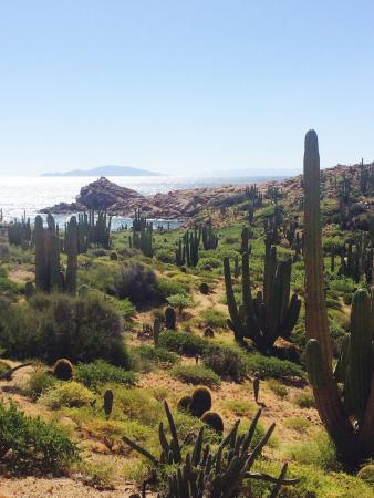 Sea & Adventures: Isla Catalana is home to the world's largest and tallest barrel cacti