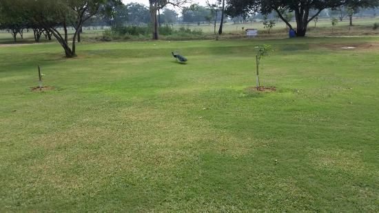 The Coimbatore Golf Club