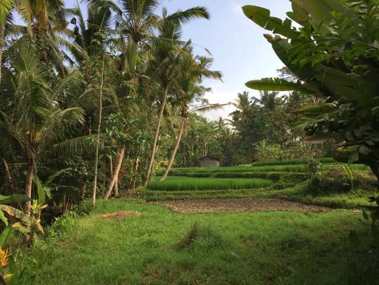 Umajati Retreat : the property from house