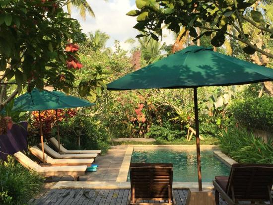 Umajati Retreat : by the beautiful pool