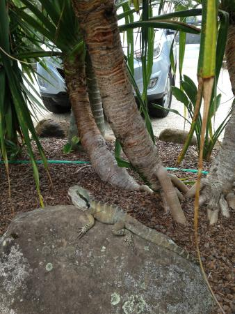 Atlantic Byron Bay: Tropical garden and resident lizard
