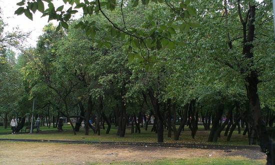 Bera Ankara : Park