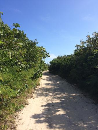 Berry Islands: Walk to the lighthouse on GSC. You might see humming birds and iguanas. Hot walk, so take a bott