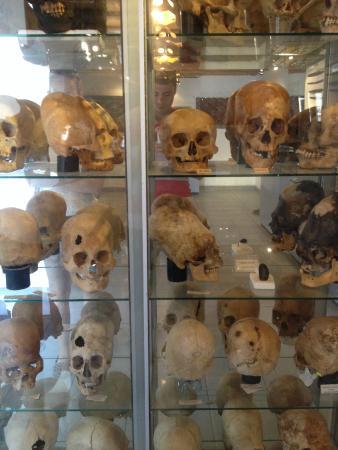 Museo Arqueologico Paracas: cranios