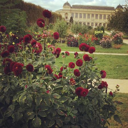 Plantes picture of jardin des plantes paris tripadvisor for Plantes paris