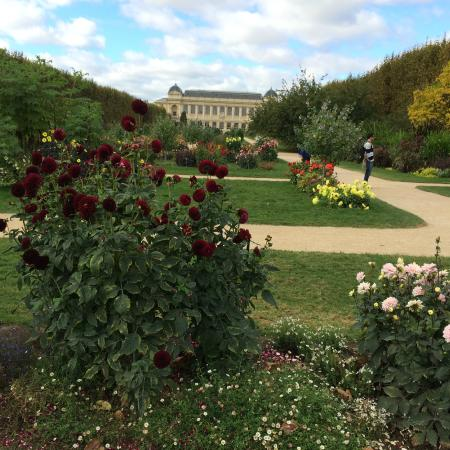 Plantes picture of jardin des plantes paris tripadvisor for Jardin plantes paris