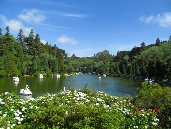Lago Negro, uma floresta restaurada (116836477)