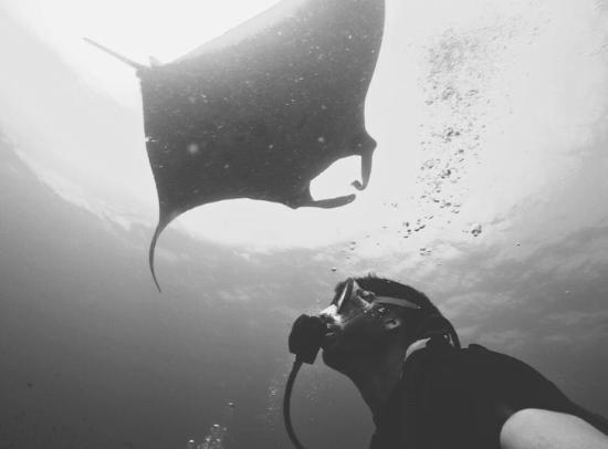 Flip Flop Divers: Manta Ray