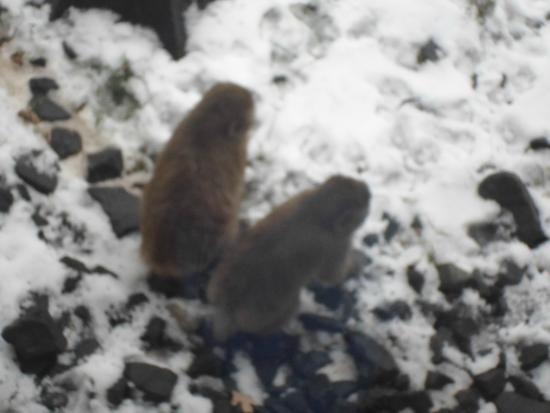 Minnesota Zoo : monkeys