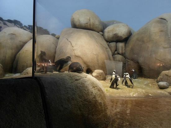 Minnesota Zoo: Penguins