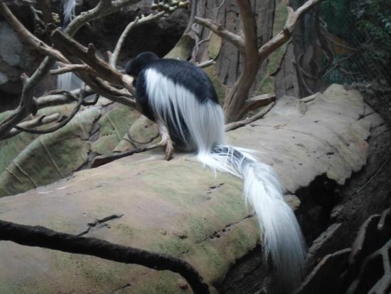 Minnesota Zoo: Monkey