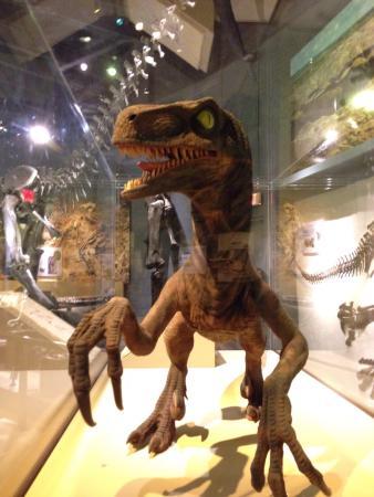 Claremont, CA: Velociraptor