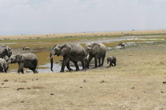 Super Cats Tours and Travel - Private Day Tours : Amboseli park Kenya safari