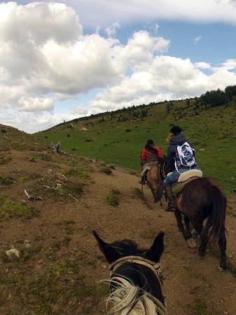 Pingo Salvaje: Cavalos ao vento