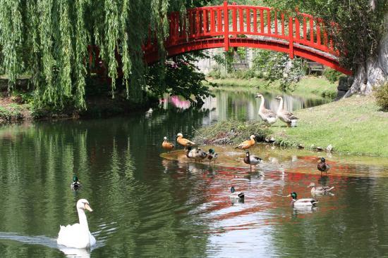 Jardin japonais picture of le potager des princes chantilly tripadvisor - Potager des princes chantilly ...