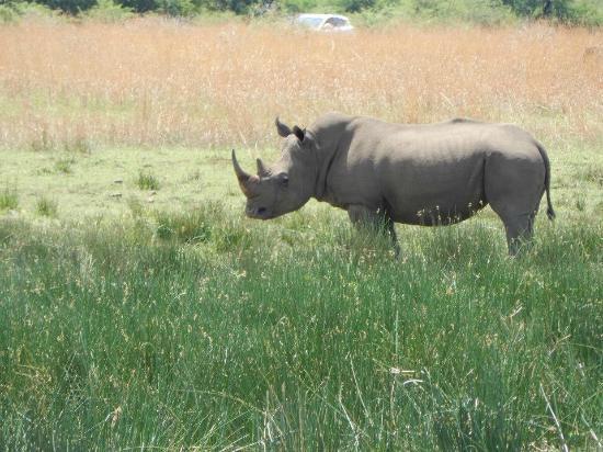 Felleng Tours: Rhino