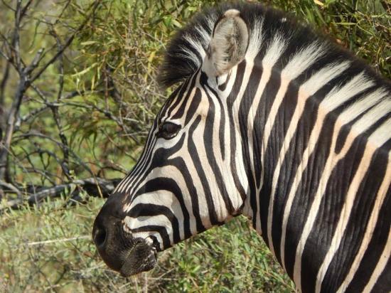 Felleng Tours: Zebra