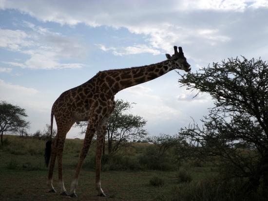 SafariWire Tanzania