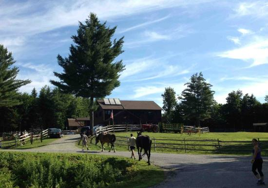 Waltham, MA: Stowe Mountain Ranch - Back from horse-back rides