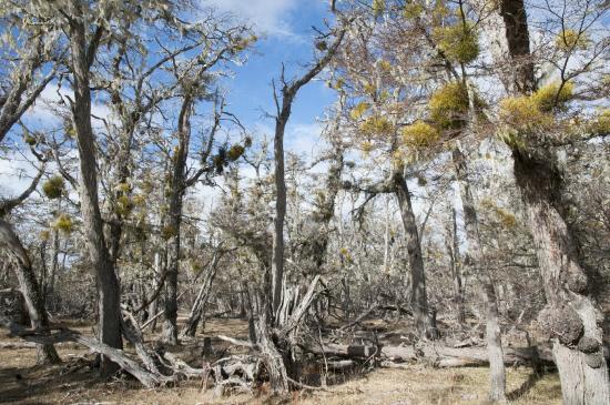 Estancia Rolito: La forêt voisine