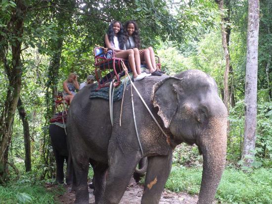 Anda Adventure - Day Tours: Elephants