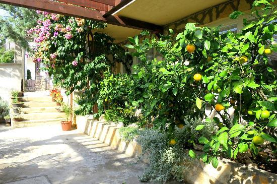 Apartments Dora: Lush Courtyard Area