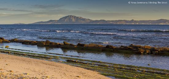 Birding The Strait: A view of the Strait of Gibraltar from the Spanish coast