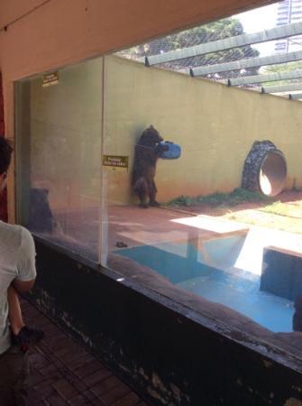 Parque Zoologico : urso brincalhão