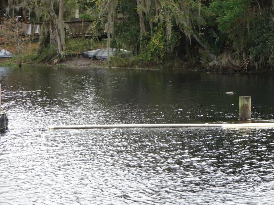 Blue Heron River Tours: River tour...