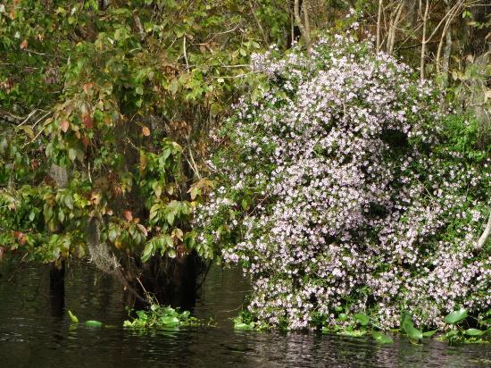 Blue Heron River Tours: Climbing Astor...