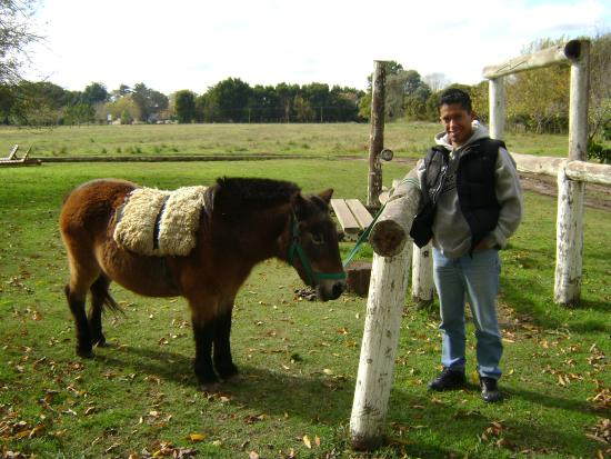 Estancia El Gateado : caballos