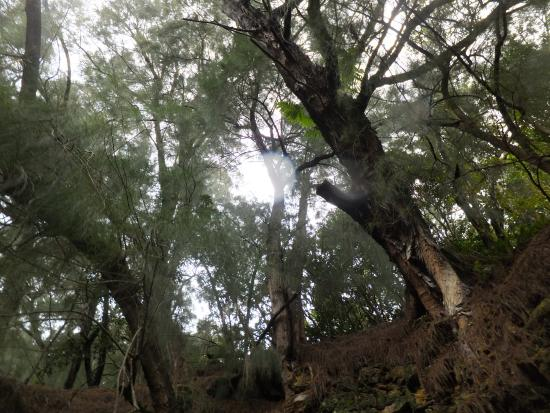 Kohala Ditch Adventures: more rainforest