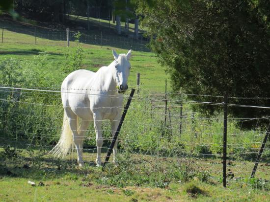 The Glass House: I woke up to see two beautiful white horses in the next field