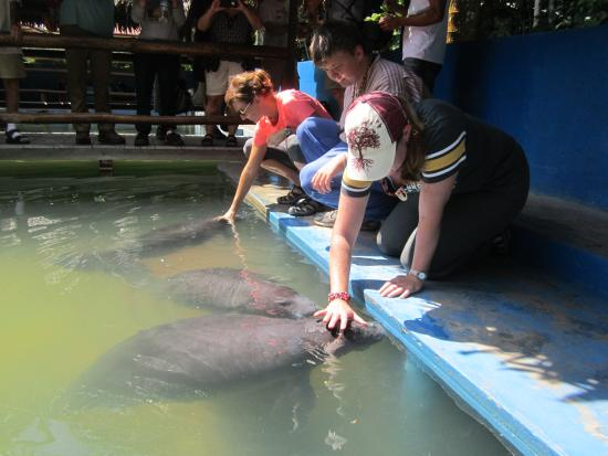Amazon Rescue Center : Come and meet the Amazonian manatee ... with your visit aids their conservation
