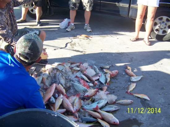 Yellow tail snapper caught from miss islamorada for Bud n mary s fishing report