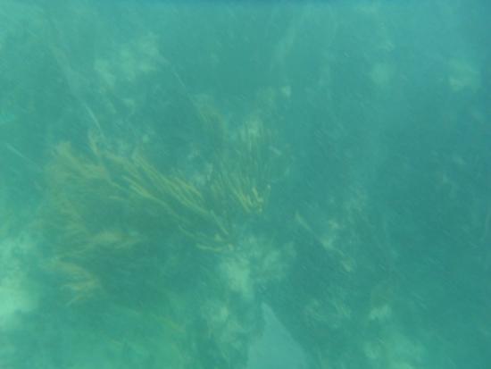 Centro Ecologico Akumal: Arrecife