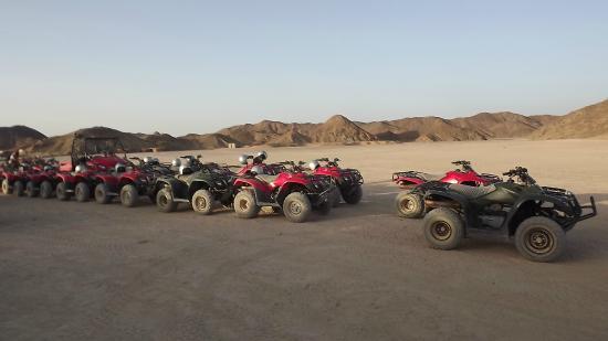 Falco Safari : perfect quads