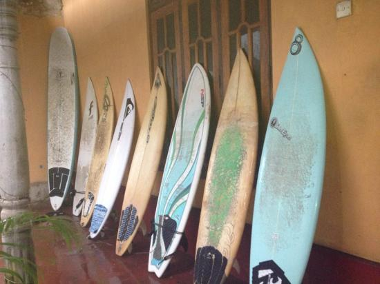 Cocoplant Surf Inn & Surf School: A Couple of the boards for hire